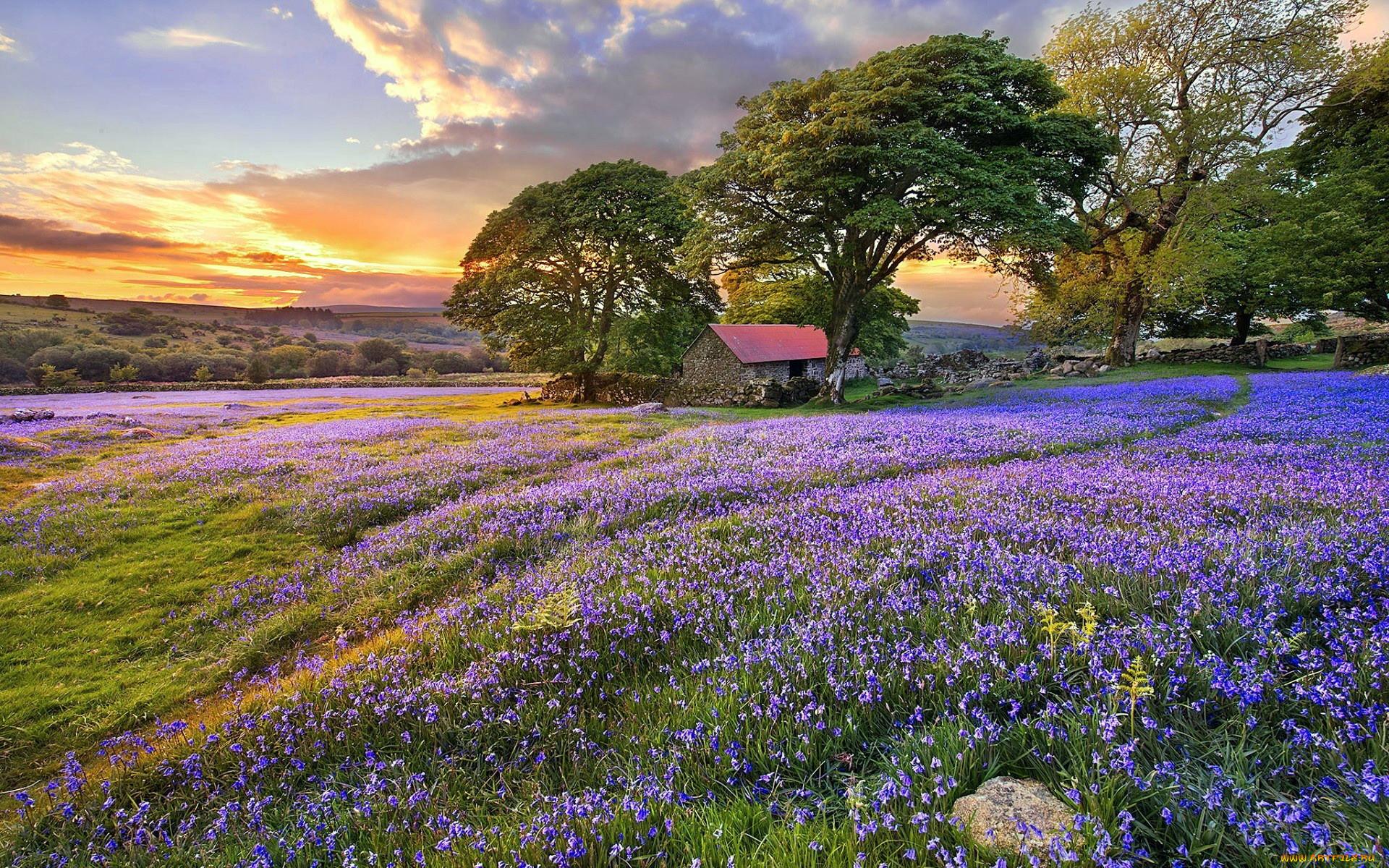 дом луг цветы фото секретами